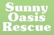 Sunny Oasis Dachshund Rescue and Friends